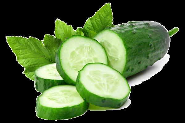 Gurkskivor med gröna blad odlade med bioenergi